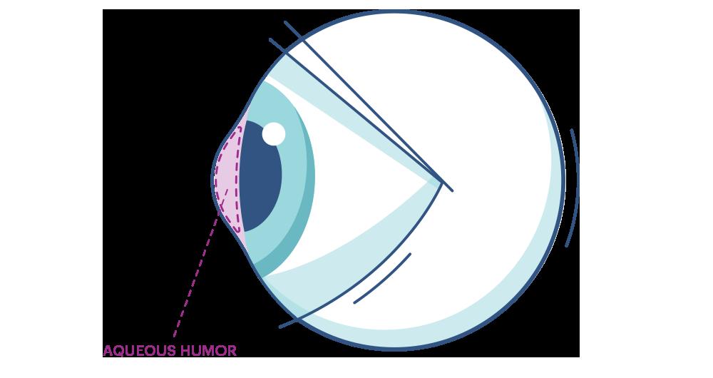 Illustration af et øje der fremhæver  kammervandet